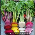 国际先进水平蔬菜包装机械