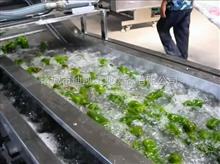 厂家供应菠菜气泡清洗机