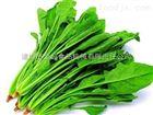 山野菜全自动清洗机(蔬菜加工成套设备)