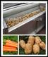 多用途食品净菜加工设备毛辊清洗机