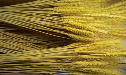 传感器、大数据等技术发力农业 解决粮食产量问题
