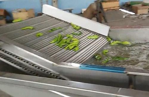 合纵机械蔬菜清洗输送