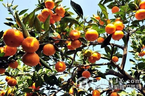 湖北荆州能种那些水果