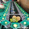 猕猴桃天平选果机  四川猕猴桃分级处理选果机